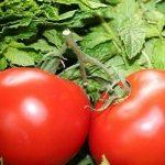 Назван овощ, защищающий от воздействия алкоголя